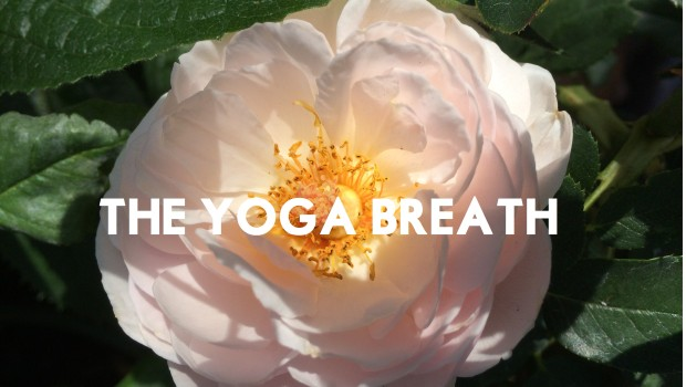 Rose yoga breath