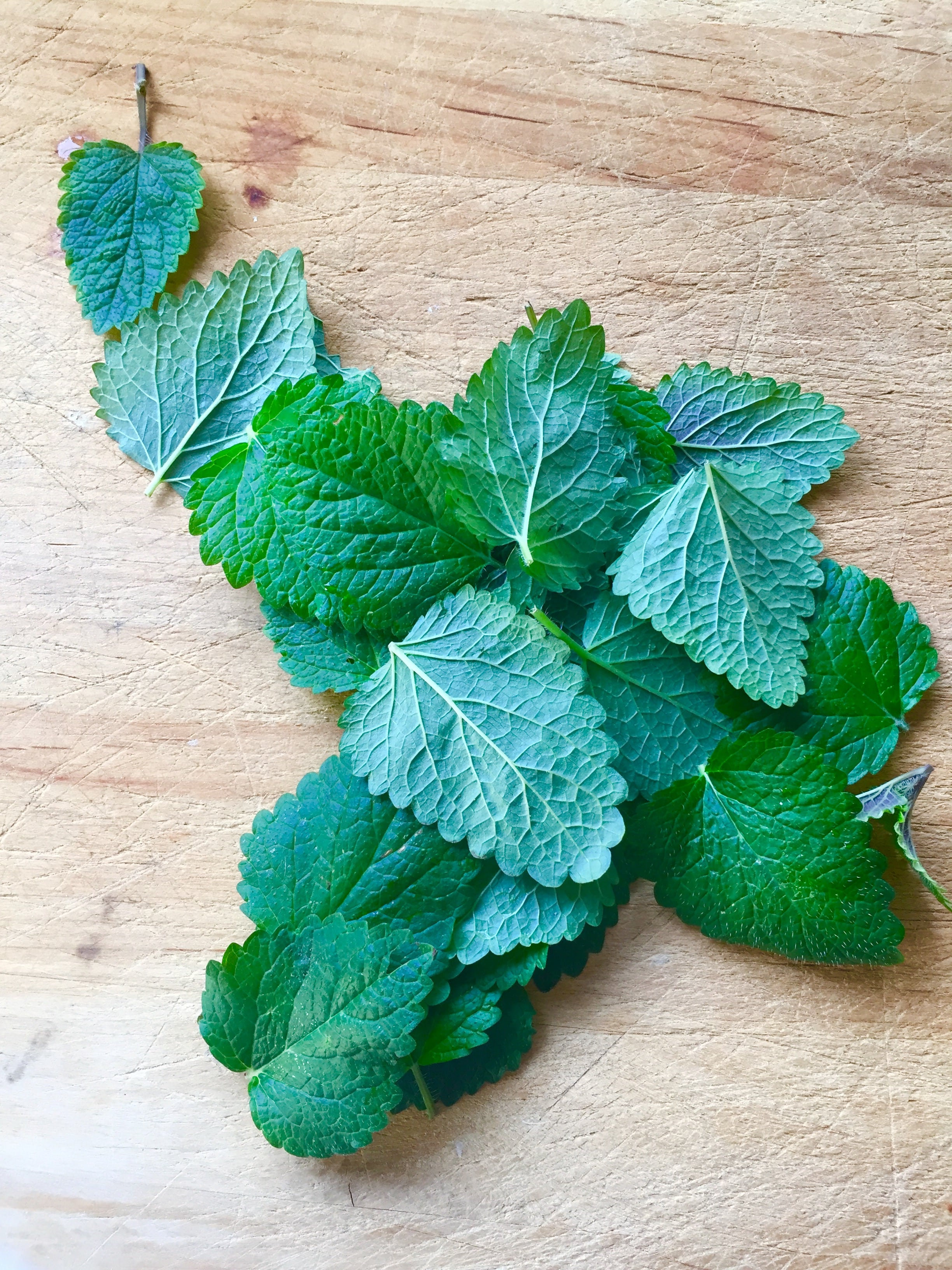 Private Yoga Instructor Santa Monica Los Angeles Brentwood Pacific Palisades Bel Air Venice Why I Love Lemon Balm
