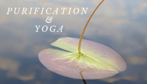 Private Yoga Instructor Santa Monica Los Angeles The Purification of Yoga