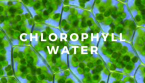 Private Yoga Instructor Santa Monica Los Angeles Chlorophyll Water