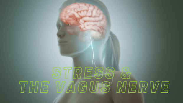 Private Yoga Instructor Santa Monica Los Angeles Stress and the Vagus Nerve